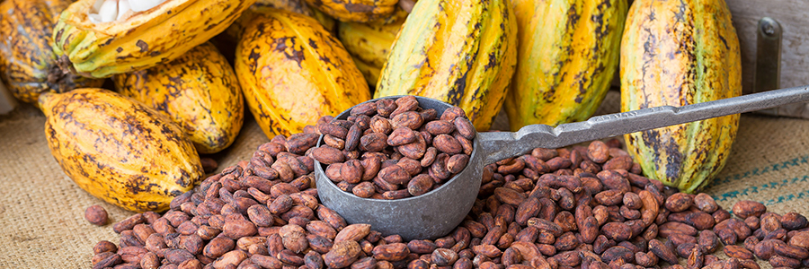 900x300_blogbenefici-cacao.jpg