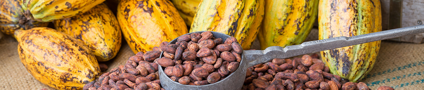 1410x300_blogbenefici-cacao.jpg